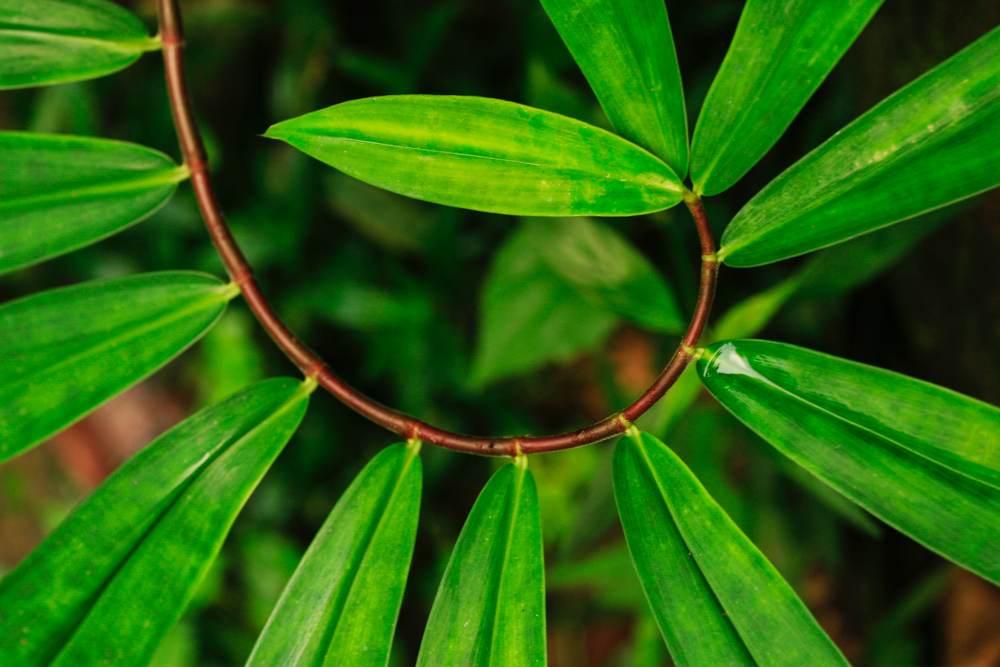Nachhaltiger Kreislauf: Circular Economy minimiert Ressourceneinsatz und Abfallproduktion. Abbildung: Pexels.