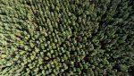 Faber-Castell: Ausbau von Klima-Engagement
