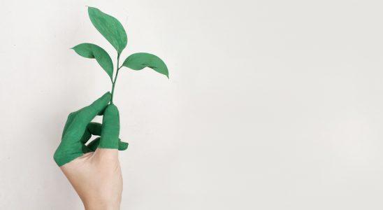 Das Konzept der Nachhaltigkeit muss Teil der Bedeutung von Made in Germany sein. Abbildung: Pexels